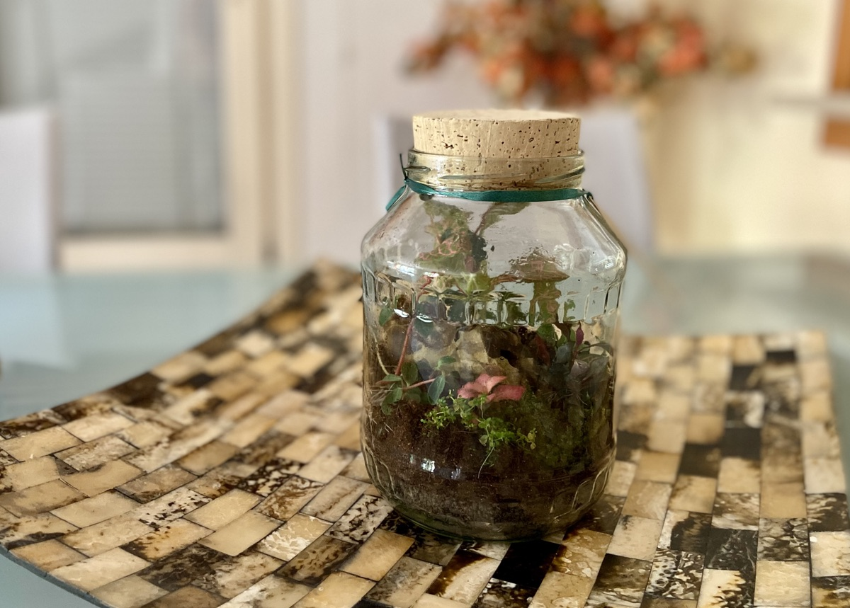 Miniaturgarten im Glas von Insane Habitats | Foto © Helmut Hackl
